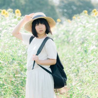 「ひまわりと夏の思い出」の写真素材