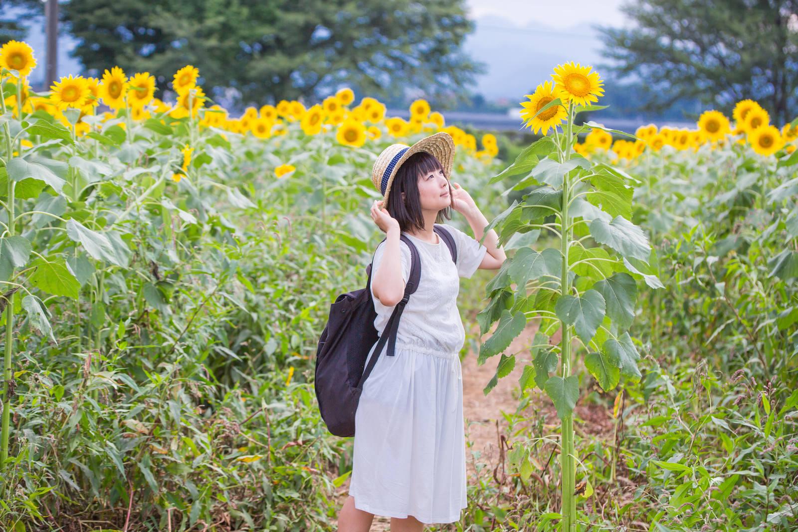 「すくすく育ったひまわりを見上げる麦わら女子」の写真[モデル:にゃるる]