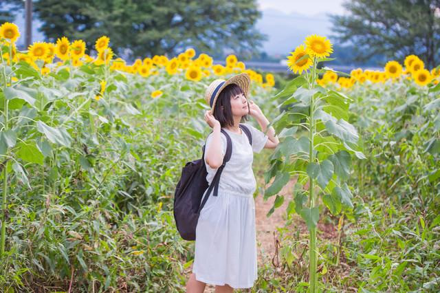 すくすく育ったひまわりを見上げる麦わら女子の写真