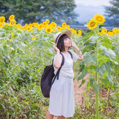 「すくすく育ったひまわりを見上げる麦わら女子」の写真素材