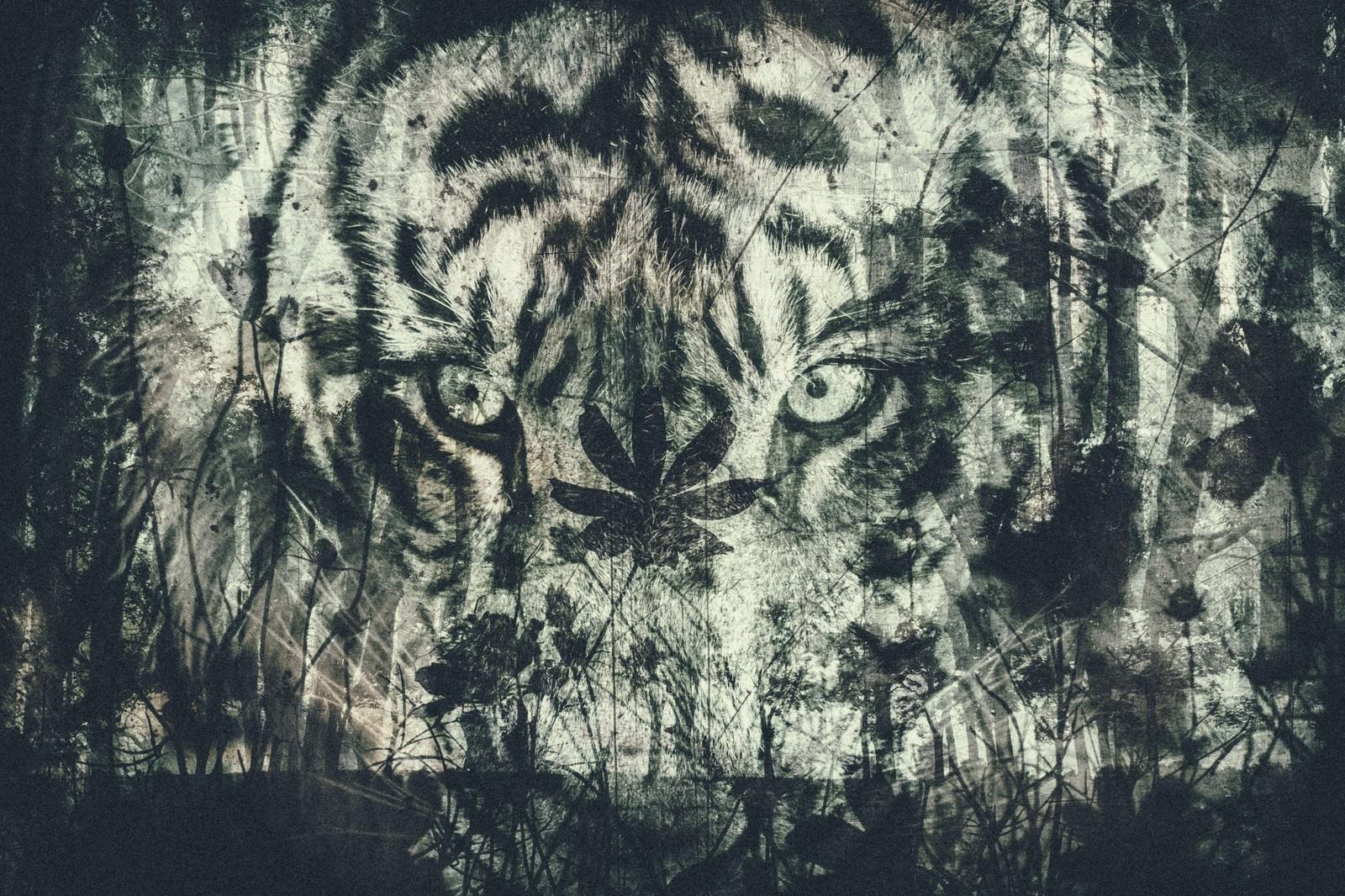 「森のとタイガー(フォトモンタージュ)森のとタイガー(フォトモンタージュ)」のフリー写真素材を拡大