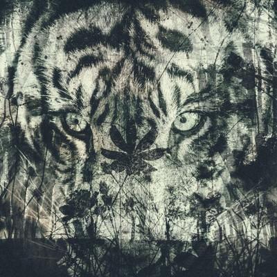 森とタイガー(フォトモンタージュ)の写真
