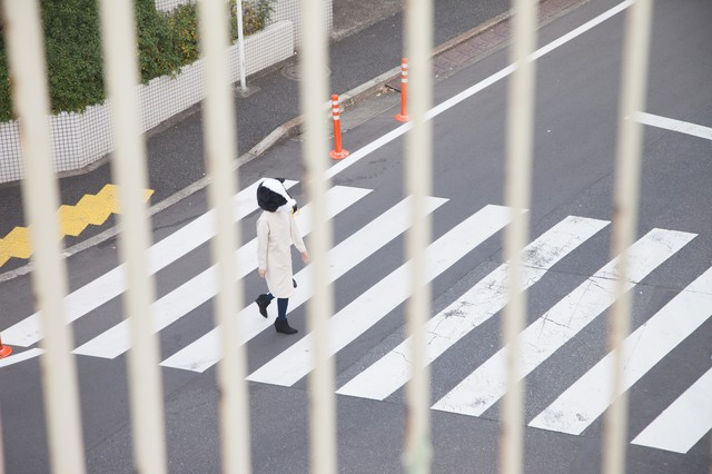 スクープ!横断歩道を渡る牛の写真