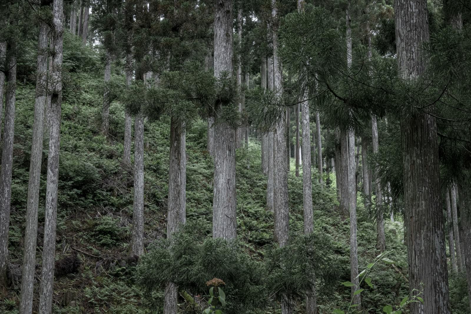 「斜面に生える木々」の写真