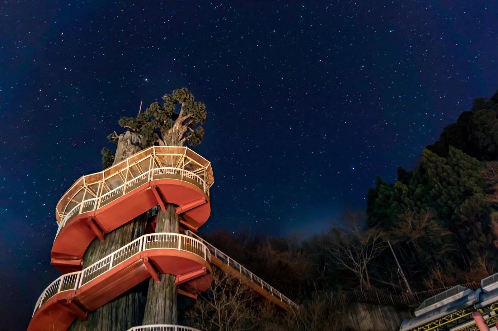 「二本の木に絡まる階段(大滝ダムの近く)」の写真