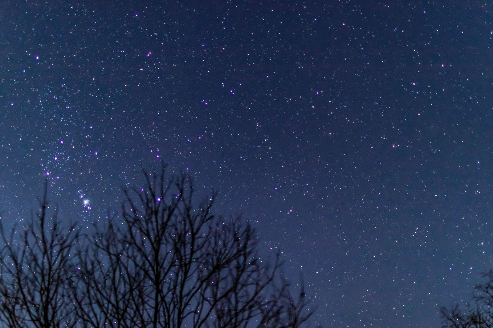 「冬の星空」の写真