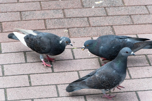 鳩に餌をあたえないでくださいの写真