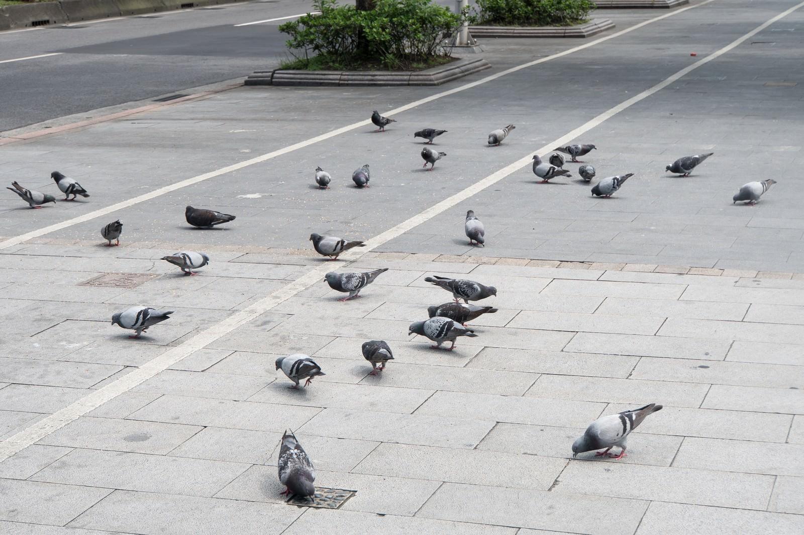 「1匹に餌を与えたら鳩が集まってきた」の写真
