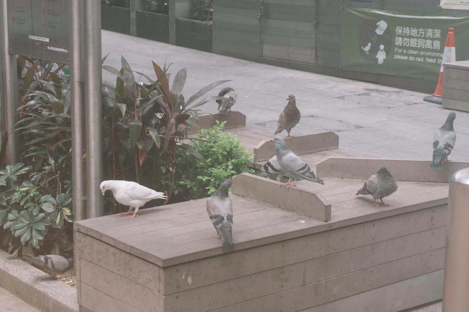 「鳩に餌を与えないで(保持方清潔)」の写真