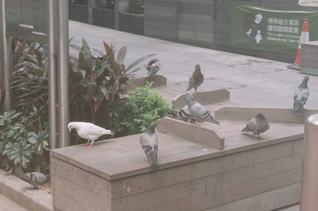 鳩に餌を与えないで(保持方清潔)の写真