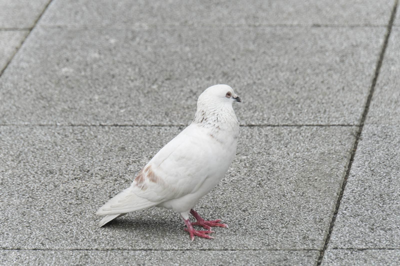 「白いクルックー」の写真