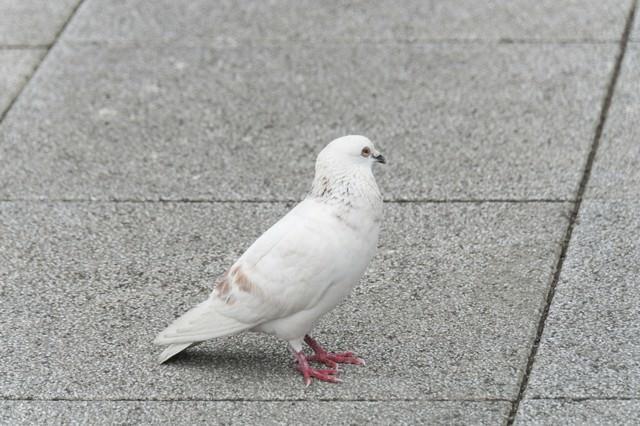 白いクルックーの写真