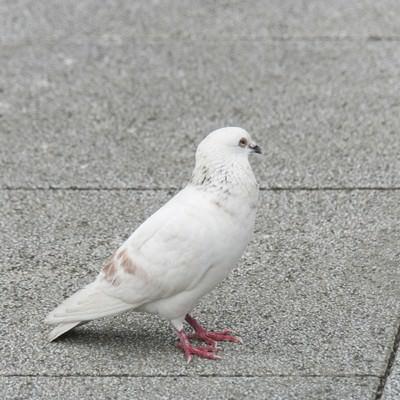 「白いクルックー」の写真素材