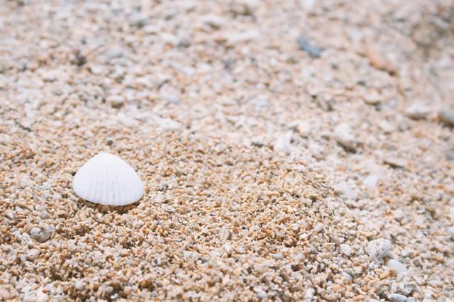 砂浜と貝殻の写真