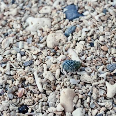 「海岸の貝殻」の写真素材