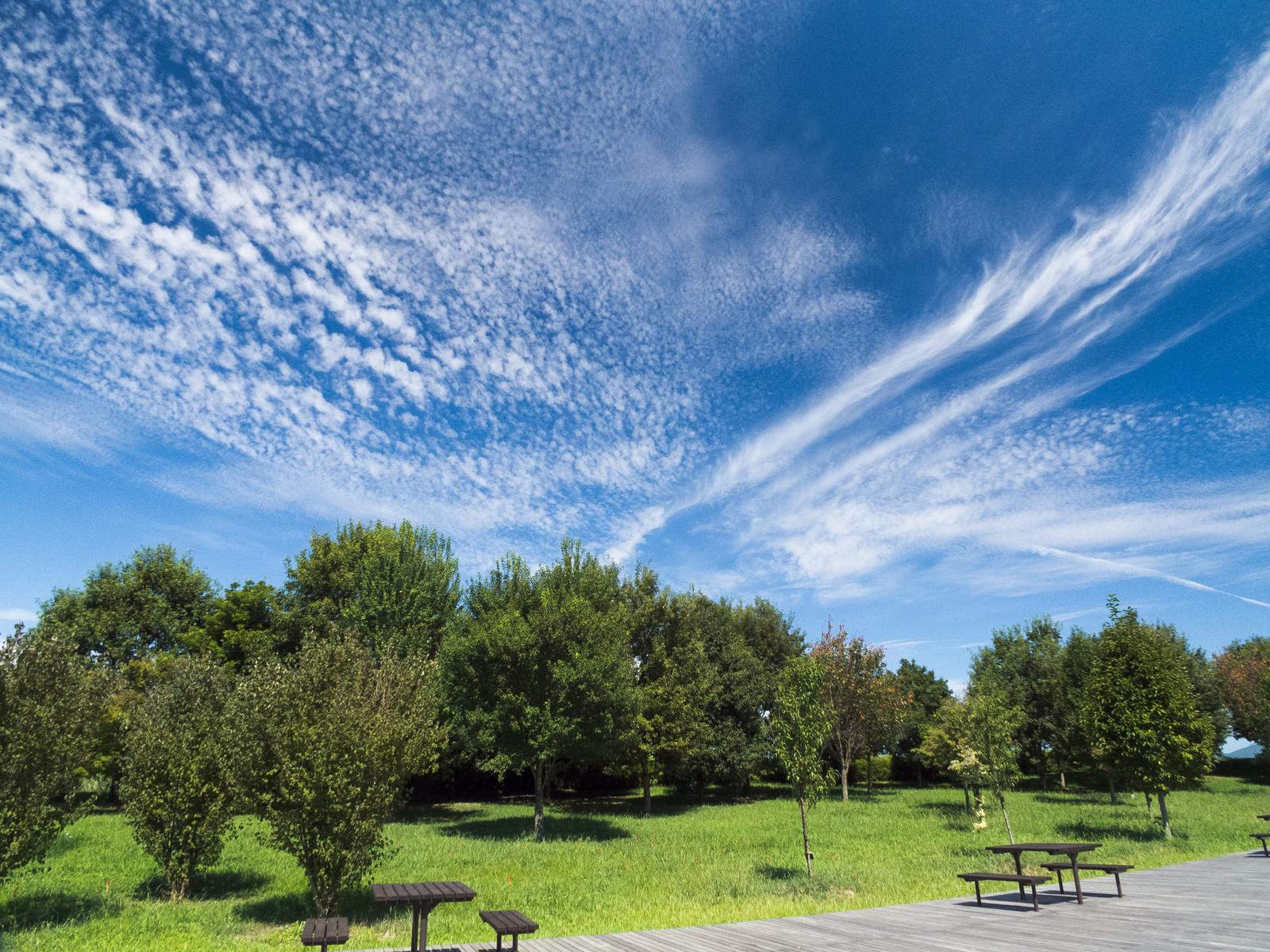「青空と公園の木々」の写真