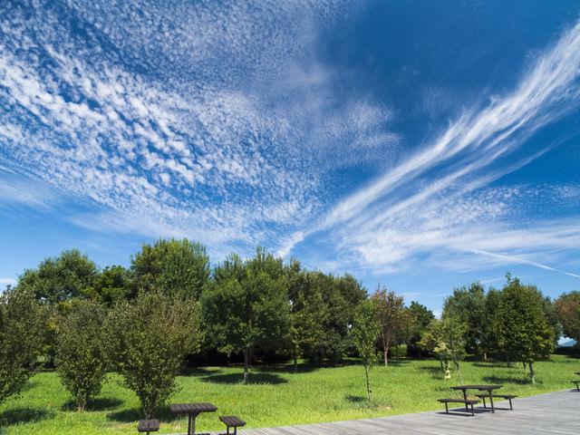 青空と公園の木々の写真
