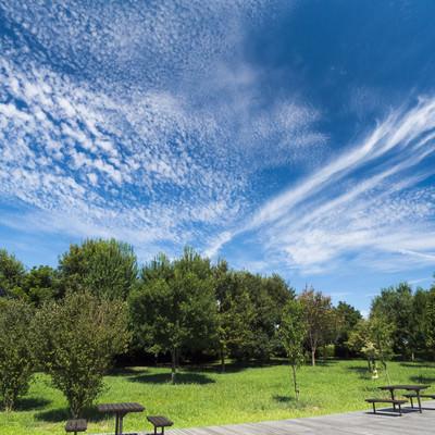 「青空と公園の木々」の写真素材