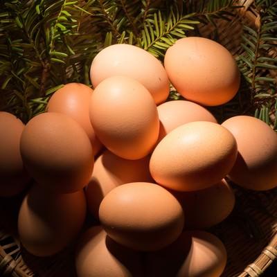 「卵かけご飯との相性が最高の「さくらこめたまご(国産)」」の写真素材