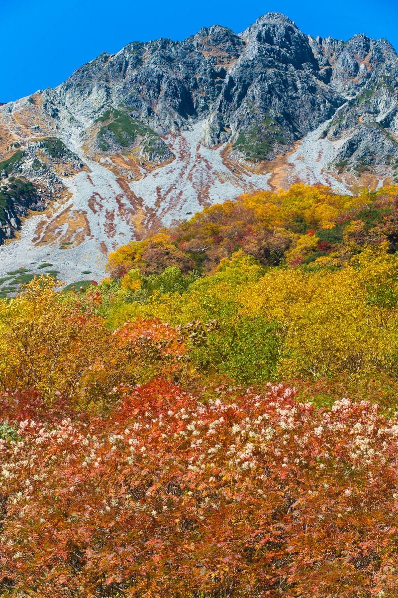 「9月の紅葉シーズンピークの涸沢カール」の写真
