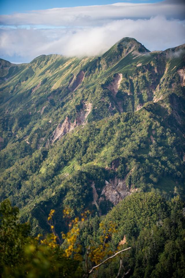 緑豊かな夏の北アルプスの稜線の写真