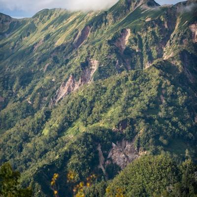 「緑豊かな夏の北アルプスの稜線」の写真素材