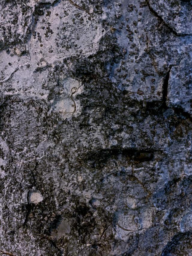 木の樹皮(テクスチャ)の写真