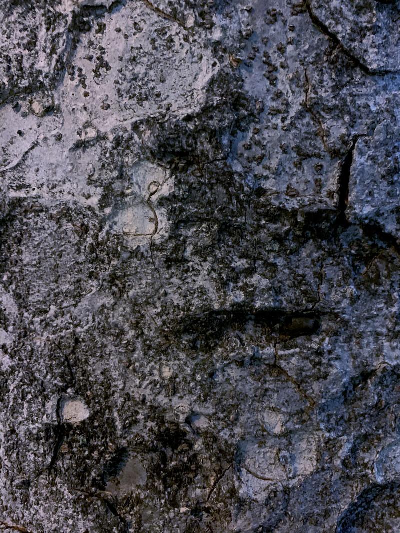 「木の樹皮(テクスチャ)」の写真