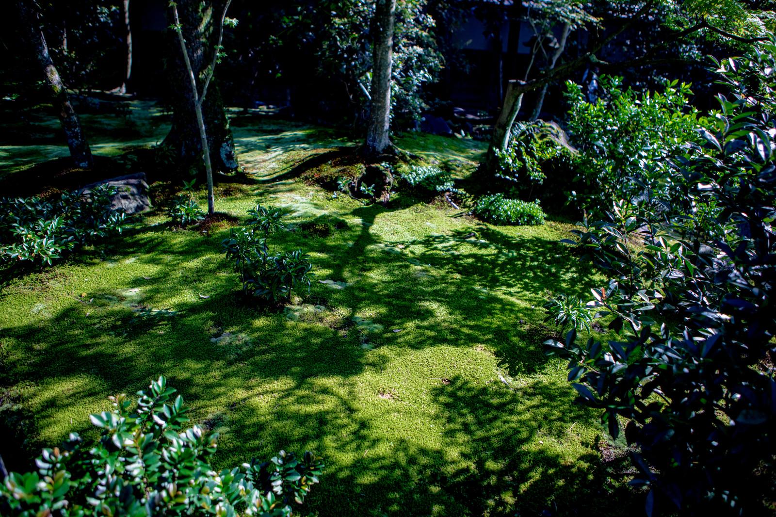 「庭先の苔に伸びる木々の影」の写真