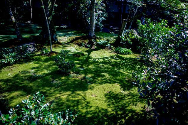 庭先の苔に伸びる木々の影の写真