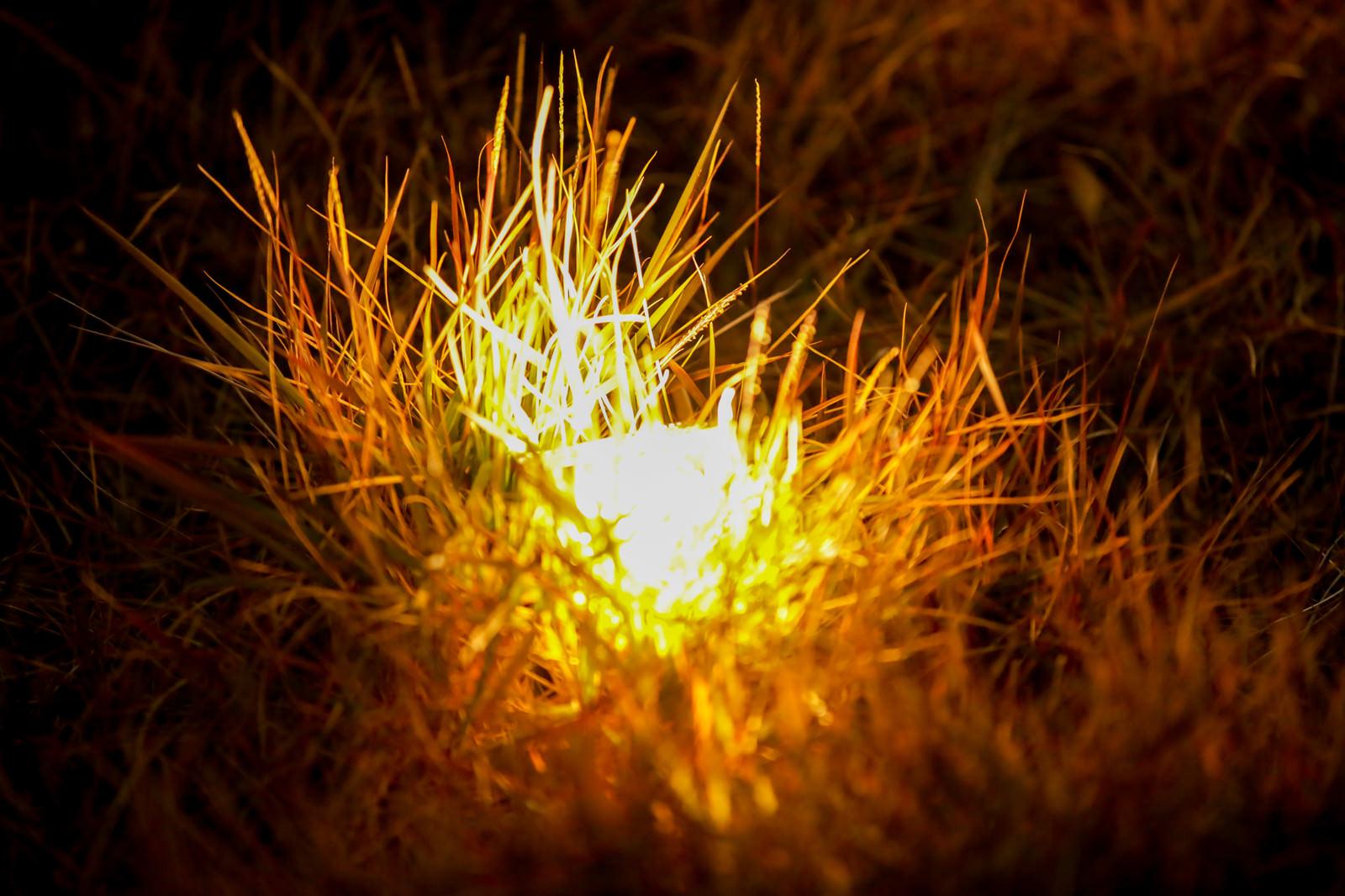 「地面に設置された電球色のネオン」の写真