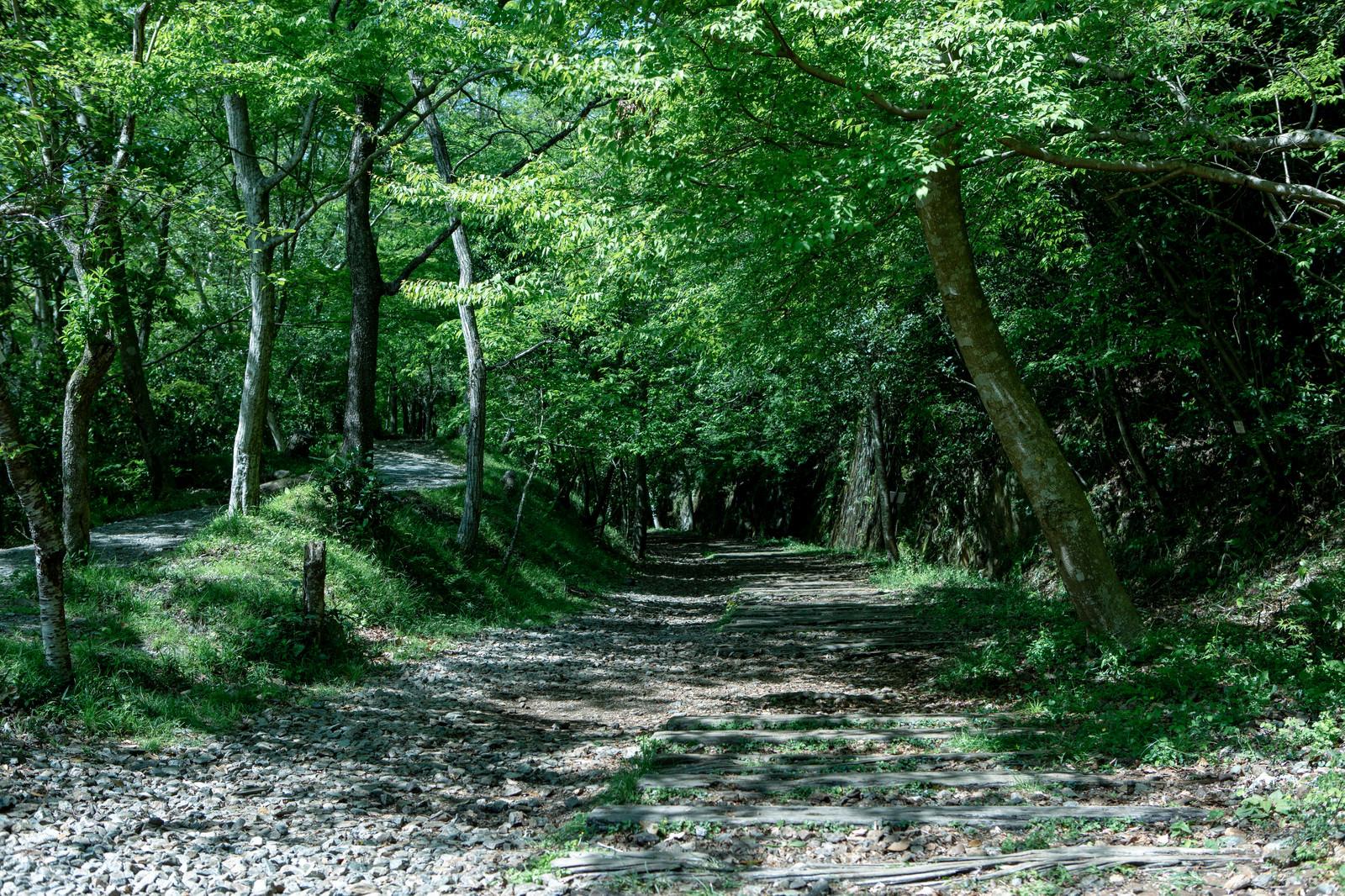「枕木続く木々のトンネル(JR福知山線廃線敷)」の写真