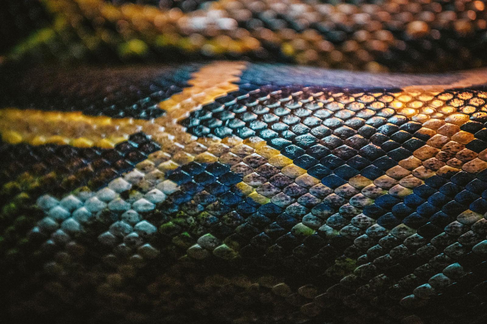 「蛇の鱗」の写真