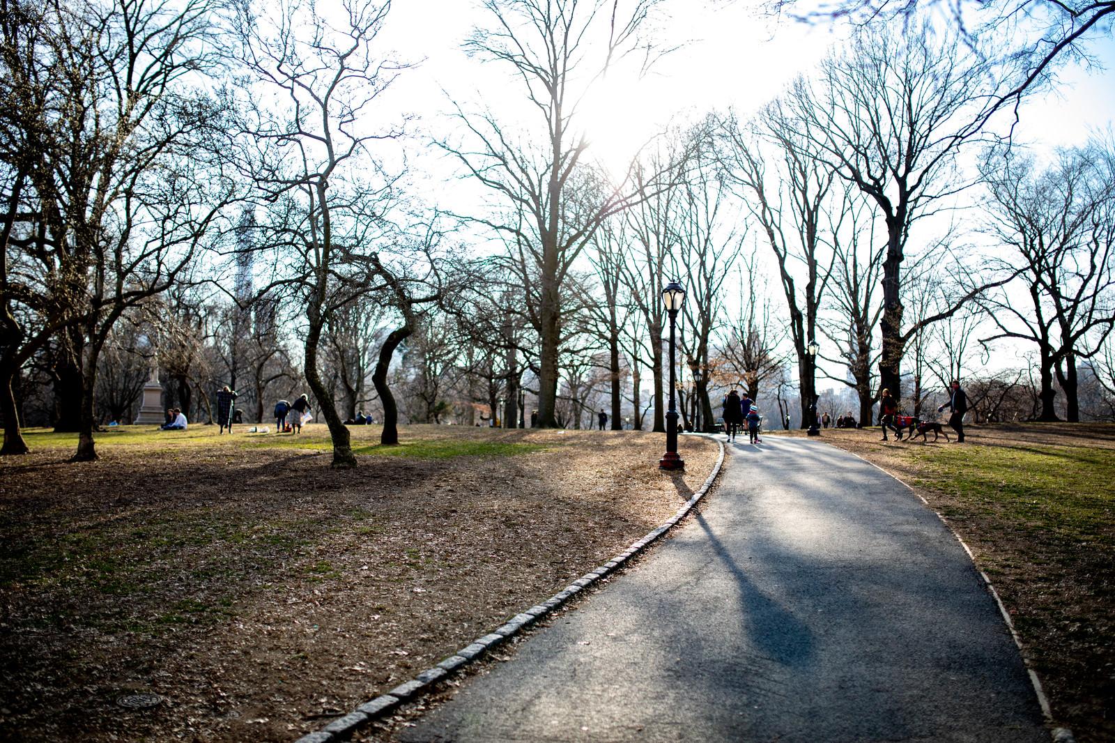 「ニューヨークの公園」の写真