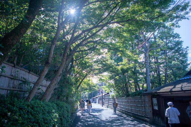 木漏れ日の中を歩く観光客(京都府)の写真