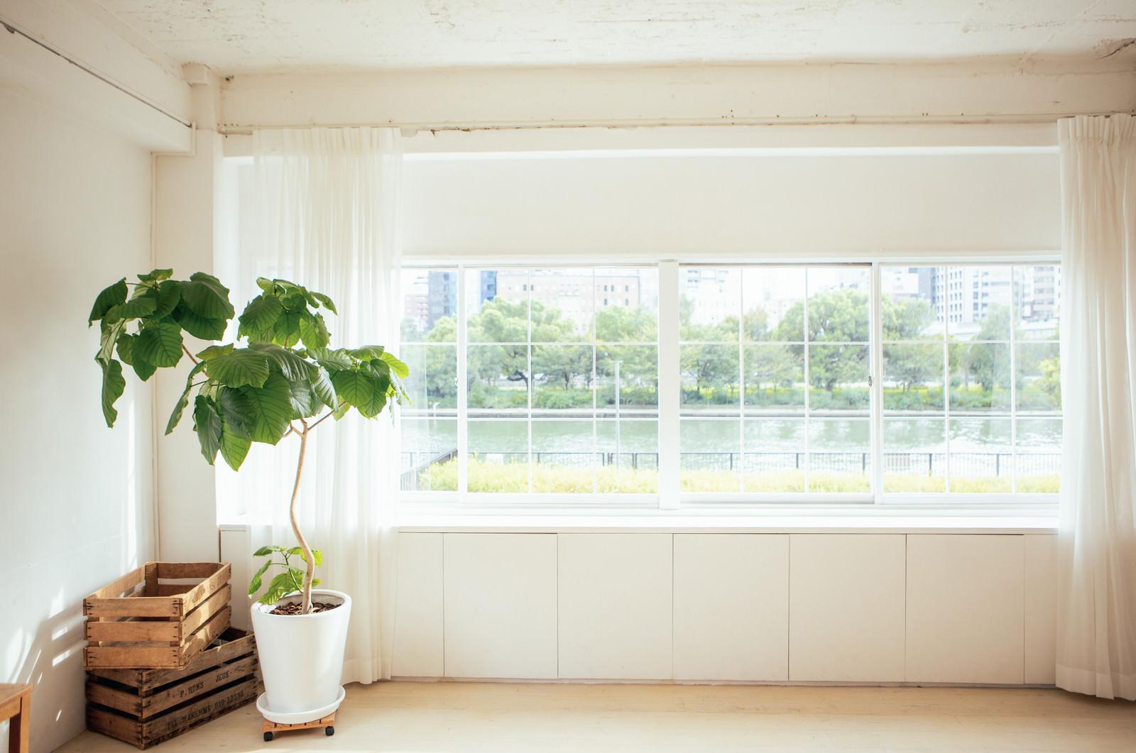 「窓から見える風景と観葉植物」の写真