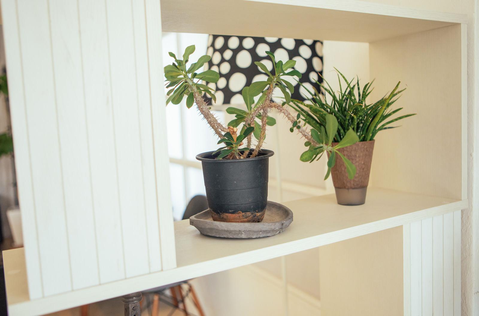 「棚に並べられた卓上サイズの観葉植物」の写真