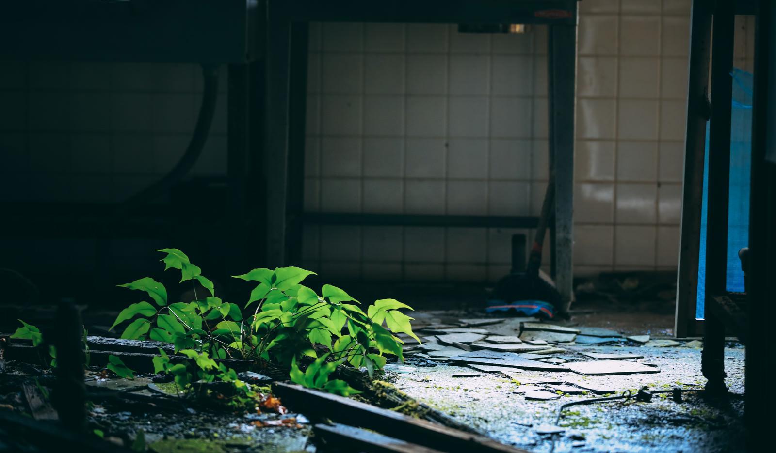 「瓦礫と廃墟に咲く青々しい植物」の写真