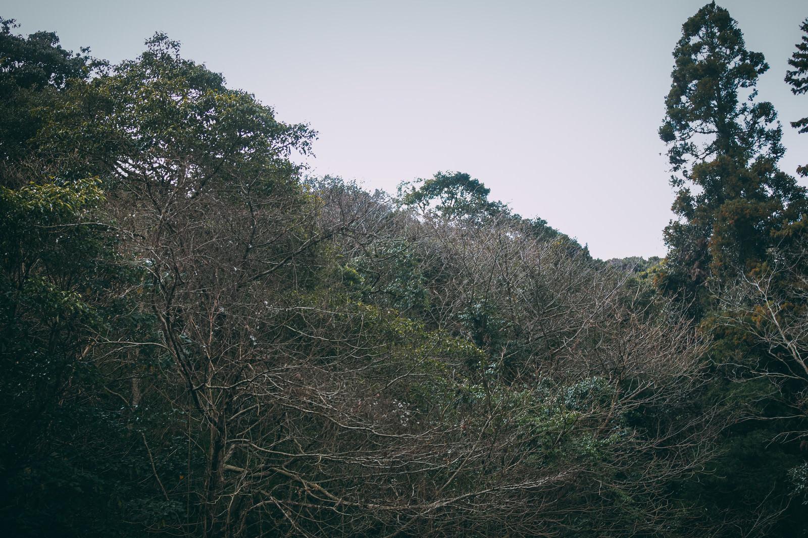 「不気味な森と密集している枯れ枝」の写真