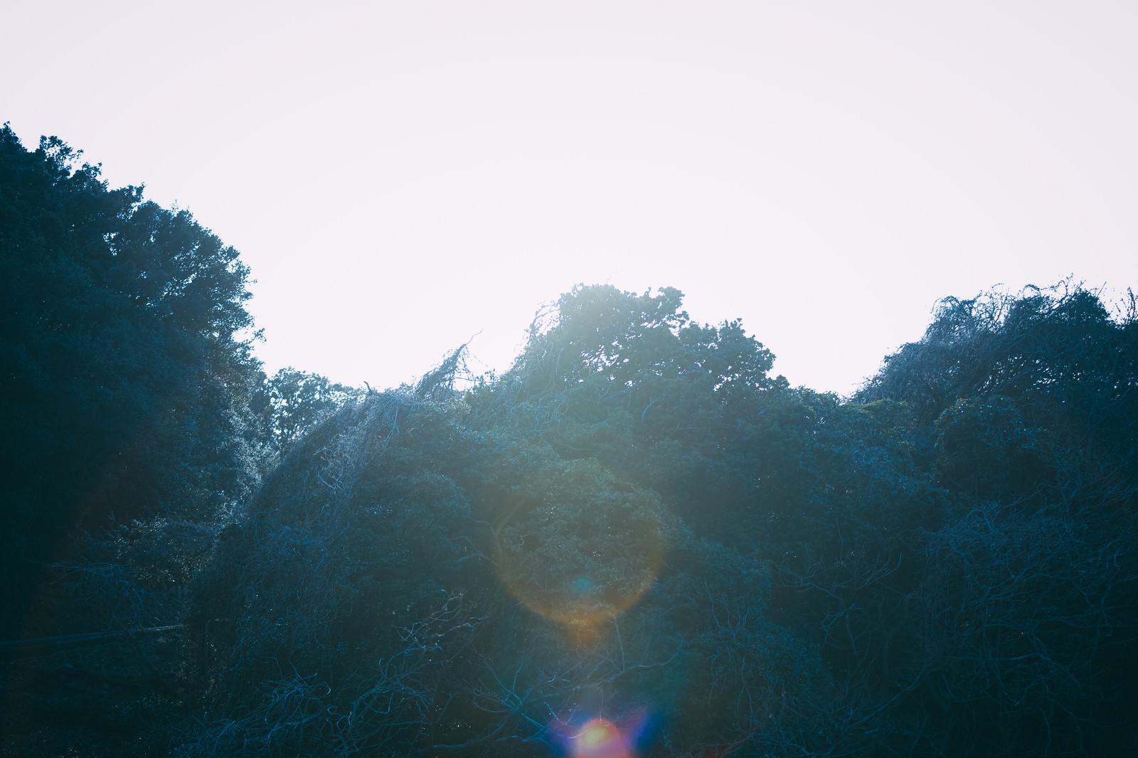 「太陽光フィルターがかかる森」の写真