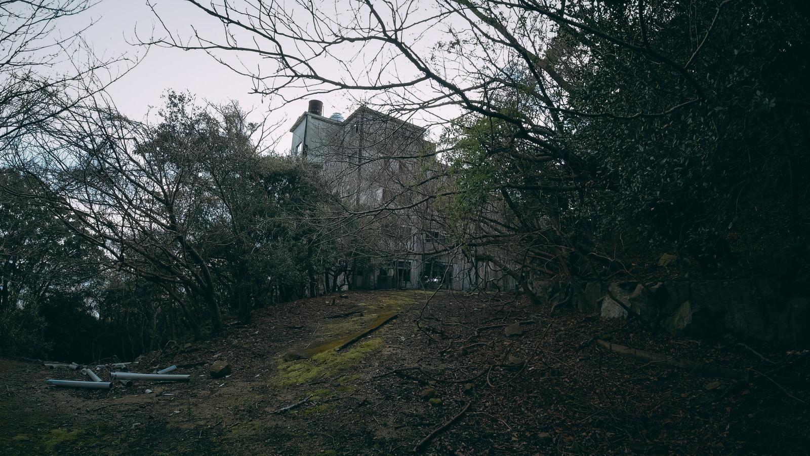 「木々に隠された廃墟」の写真