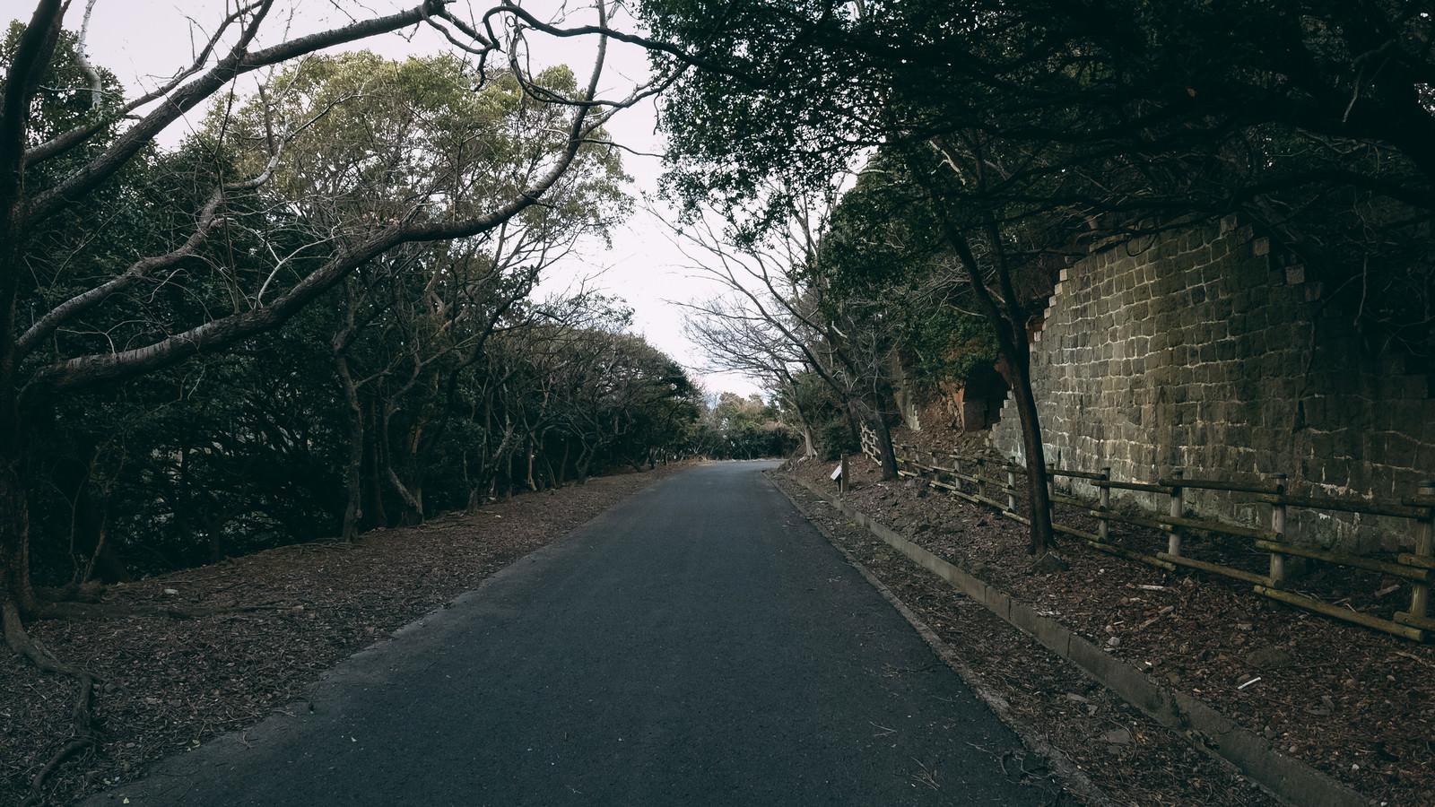 「林道と塀に挟まれたアスファルトの道」の写真