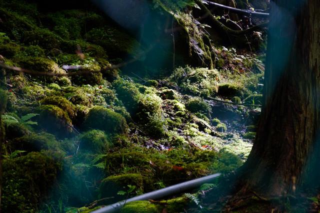 横谷峡に生える苔の写真