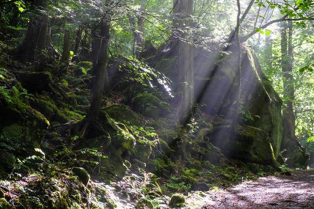 横谷峡遊歩道に差し込む光の写真