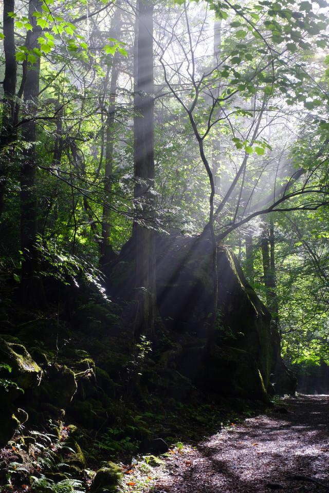 木々に囲まれた横谷峡遊歩道の写真