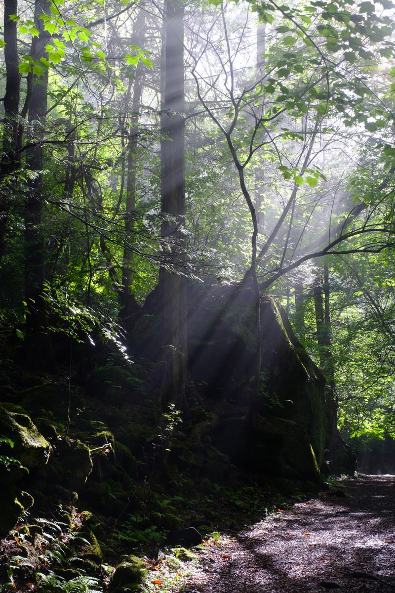 「木々に囲まれた横谷峡遊歩道」の写真