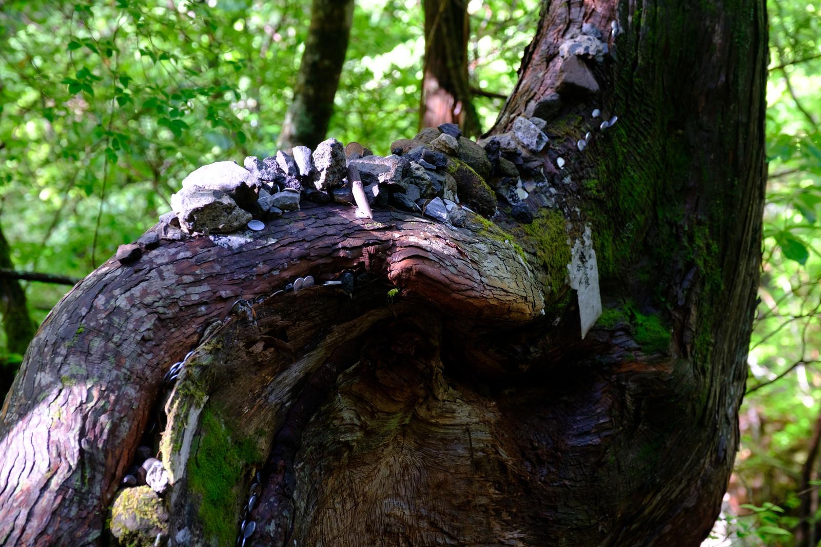 「祀られた樹木(横谷峡) | 写真の無料素材・フリー素材 - ぱくたそ」の写真