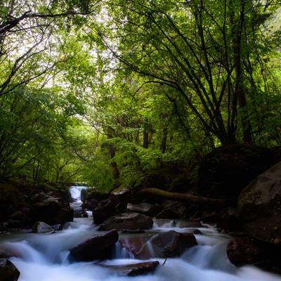 横谷渓谷のせせらぎの写真