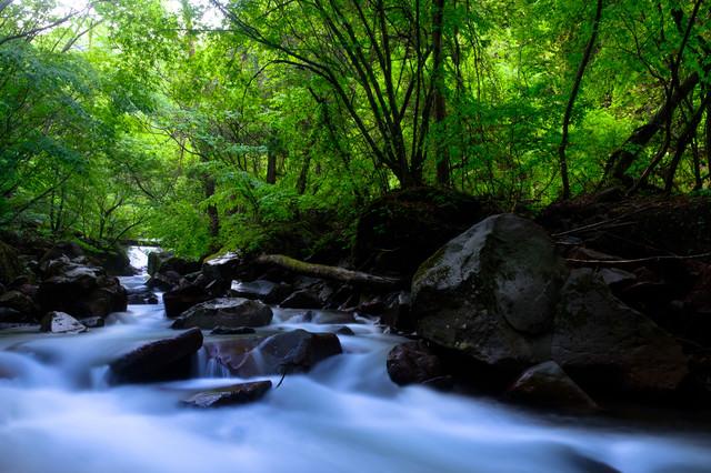 森に囲まれた横谷渓谷の写真