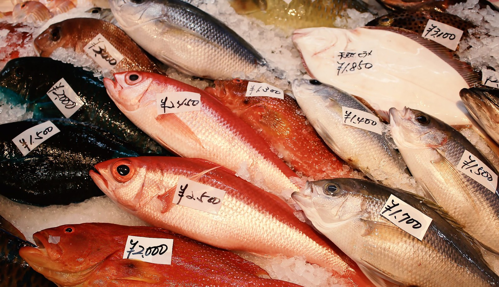 「鯛やヒラメの魚市場」の写真